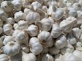 Fresh Ooty Garlic