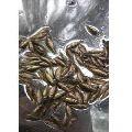 Katla Fish Seeds