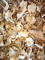 Oyester mushroom dry