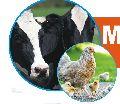 Multi Vita-H Multivitamin Liquid Animal Feed Supplement