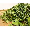 Organic Stevia Dry Leaf