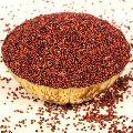 Red Millet Seeds