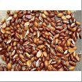 Indian Mahua Seeds