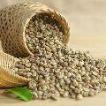 Arabica Coffee Parchment Green Beans (Grade A)