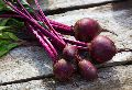 Fresh Natural Beetroot