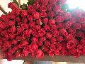 Taj Mahal Roses