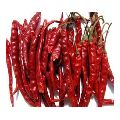 Fresh Organic Dried Red chilly