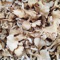 Organic Dried Oyster Mushroom