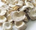 White Dried Oyster Mushroom