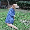 Dog Sweaters - Snug Bug