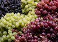 Fresh Organic Grapes