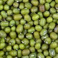 Green Gram Pulses