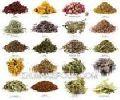Organic Leaf Herbs