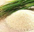 Sharbati Basmati Rice