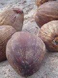 brown coconut