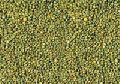 Green Millet Bird Seeds
