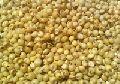 Yellow Sorghum Seeds