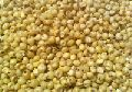 Yellow Sorghum Bird Seeds