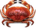 Frozen Red Crab