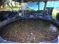 Ras fish tanks