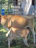 Milking Feeds