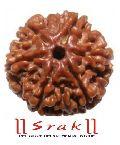 6 Mukhi Rudraksha (N)