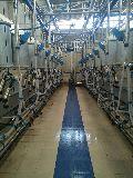 Herringbone milking parlors