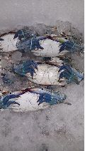 Frozen Blue Crab