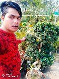 Ficus bonsai plant