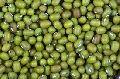 Moong Gram Seeds