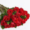 Fresh B Grade Dutch Rose Flower