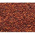 Red Gram Seeds