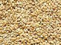 Barley Feed Grains