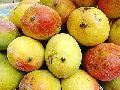 Chausa Mangoes