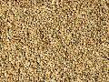 Guar Seeds 01