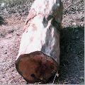 Bilinga Wood Timber