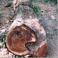 Ghana Teak Wood Timber