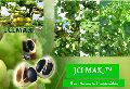 Jatropha Curcas Improved Seeds