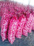 Fresh Indian Nashik Red Onion