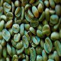 Green Coffee Beans