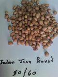 Peanut (java 50/60)