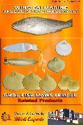 Ghol Fish Maws (Female)