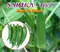 Lady Finger Seeds (Sarika - 657)